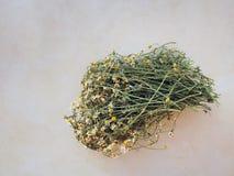 Wild Chamomile Tea, Greece Stock Photos