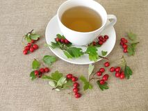Herbal tea with hawthorn herbs Royalty Free Stock Images