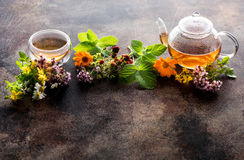 Herbal tea with healing herbs. Medicinal herbs and tea and copy space for text Stock Image