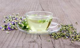Herbal tea with heartsease. Cup of tea with fresh and dried flowers from field pansy on a wooden background Stock Photography