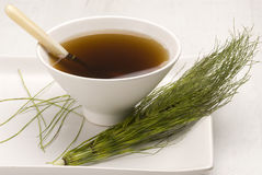 Herbal tea. Horsetail. Royalty Free Stock Photography