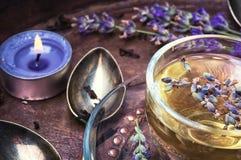 Herbal Tea with lavender. Fragrant herbal tea with flowering lavender sprigs Royalty Free Stock Photos