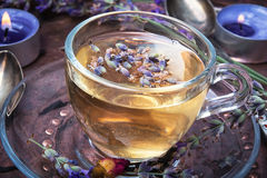 Herbal Tea with lavender. Fragrant herbal tea with flowering lavender sprigs Stock Images