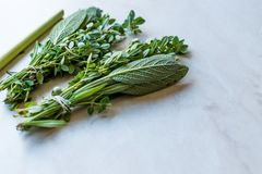 Herbal Tea Leaves Include Lippia, Sage, Rosemary Thyme and Lemon. Organic Beverage Stock Photography