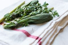 Herbal Tea Leaves Include Lippia, Sage, Rosemary Thyme and Lemon. Organic Beverage Stock Image