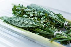 Herbal Tea Leaves in Plastic Box Include Lippia, Sage, Rosemary Thyme and Lemon. Organic Beverage Stock Photos