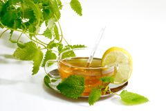 Herbal Tea with Lemon Balm Leaves. Lemon balm tea in a glass cup with garnish on light background royalty free stock photo