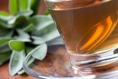 Herbal tea made of fresh sage Royalty Free Stock Image