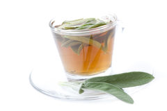 Herbal tea made of fresh sage on white background Stock Photography