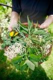 Herbal tea making Royalty Free Stock Image