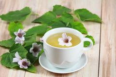Herbal tea from marshmallow. Marsh mallow, lat. Althaea officinalis, is good against  cough Royalty Free Stock Photo
