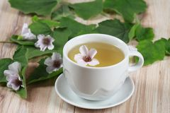 Herbal tea from marshmallow. Marsh mallow, lat. Althaea officinalis, is good against  cough Stock Image
