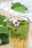 Herbal tea from marshmallow. Marsh mallow, lat. Althaea officinalis, is good against  cough Royalty Free Stock Image
