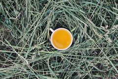 Herbal tea of medical plants in a cup outdoors. On mawn green grass stock photos