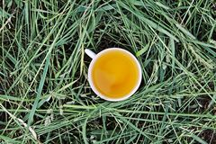 Herbal tea of medical plants in a cup outdoors. On mawn green grass royalty free stock photos