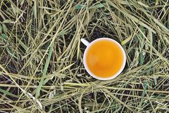 Herbal tea of medical plants in a cup outdoors. On mawn green grass royalty free stock image