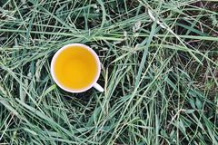 Herbal tea of medical plants in a cup outdoors. On mawn green grass stock images