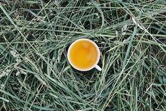 Herbal tea of medical plants in a cup outdoors. On mawn green grass stock photography