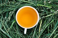 Herbal tea of medical plants in a cup outdoors. On mawn green grass royalty free stock photography