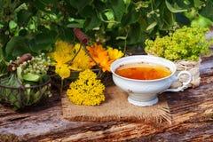 Herbal tea and medicinal plants Royalty Free Stock Image