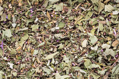 Herbal tea medicinal plants, homeopatic. Stock Image