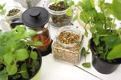 Herbal tea. Stock Photography