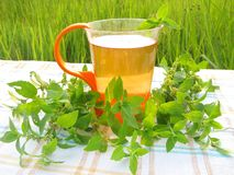 Herbal tea with mint outdoors Royalty Free Stock Photos