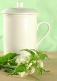 Herbal tea - nettle royalty free stock photos