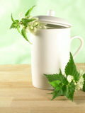 Herbal tea - nettle stock photo