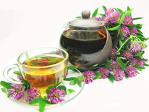 Herbal tea with pink clover Royalty Free Stock Photography