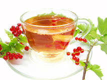 Herbal tea with red currant extract Stock Image