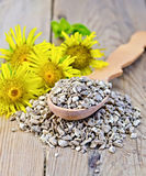Herbal tea from the root of Elecampane on a spoon with flowers Royalty Free Stock Photos