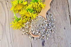 Herbal tea from the root of Elecampane on a spoon on top Stock Photography