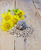 Herbal tea from the root of elecampane in strainer Stock Image