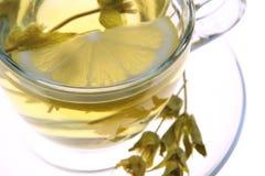 Herbal tea, sage leaves and lemon slice on white background, macro shot, Royalty Free Stock Image