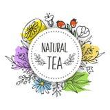 Herbal tea seamless pattern. Royalty Free Stock Image