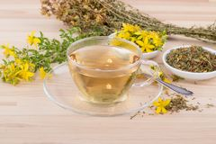 Herbal tea of  St. John`s wort. Cup of herbal tea with dried and fresh St. John`s wort Royalty Free Stock Images