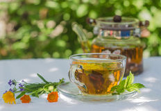 Herbal tea in teapot and cup Stock Image