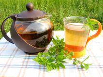 Herbal tea and teapot with fresh mint Stock Image