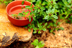 Herbal Tea with thyme. Royalty Free Stock Image