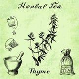 Herbal tea, thyme, mortar and pestle, bag, tea bag. Stock Image