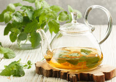 Herbal tea in a transparent teapot on the table and sprigs of fresh Melissa lemon balm and mint Stock Photography