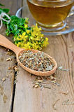 Herbal tea from tutsan dry and fresh on the spoon Royalty Free Stock Image