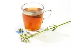 Herbal Tea with Valerian Royalty Free Stock Photo