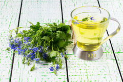 Herbal tea from Veronica Chamaedrys and flowers Stock Image