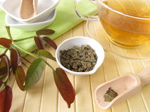 Herbal tea with walnut leaves Stock Photos