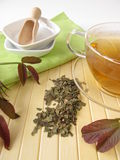 Herbal tea with walnut leaves Stock Photography