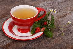 Herbal tea with wild strawberries Stock Photography