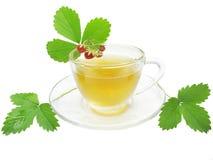 Herbal tea with wild strawberry Stock Image