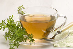 Herbal tea. Wine rue. Royalty Free Stock Photo